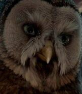 Allomere in Legend of the Guardians The Owls of Ga'Hoole