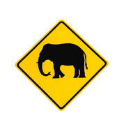 Danger Mad Elephant