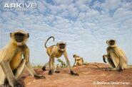 E02485f1f7b26eb142261a3bb1d85cc3--animals-photos-wildlife-photography