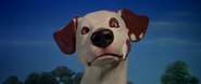 Jack Russell Terrier from Nickelodeon Movies