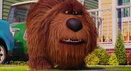 Secret-life-pets-disneyscreencaps.com-7839