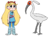 Star Meets Crested Ibis