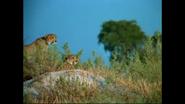 WAET Cheetahs
