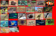 Animal Alphabet 10