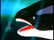 Attacked by a Killer Whale