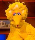Big Bird in The Colbert Report