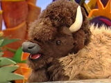 Custer the Bison