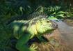 Green-iguana-planet-zoo