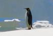 King-penguin-planet-zoo