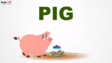 MagicBox Pig
