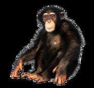 NatureRules1 Chimpanzee