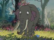 Rileys Adventures Bornean Pygmy Elephant