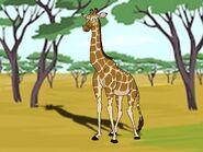 Rileys Adventures Kordofan Giraffe