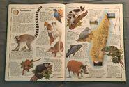 The Animal Atlas (17)