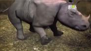UTAUC Rhino