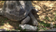 Niabi Zoo Tortoise