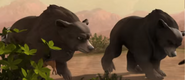Superbook Bears