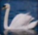 Swan-disneythinkfast
