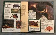 Wild Creatures (Eyes On Nature) (20)