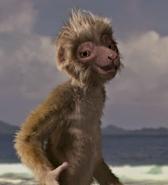Zini the Lemur