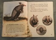 Awesome Animals (Road to Reading) (20)