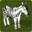 Common Zebra (Blue Fang)