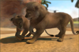 Congo-lion-ztuac