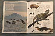 DK Encyclopedia Of Animals (138)