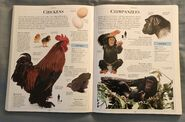 DK Encyclopedia Of Animals (59)