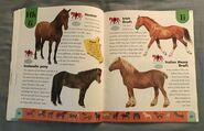 Horse Dictionary (11)