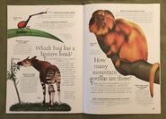Jungle Animals (Over 100 Questions and Answers to Things You Want to Know) (13)