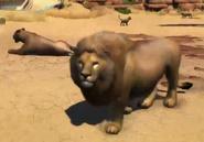 Masai-lion-zootycoon3