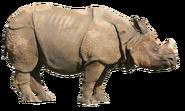 NatureRules1 Indian Rhino
