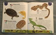 Reptiles and Amphibians Dictionary (18)
