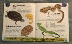 Reptiles and Amphibians Dictionary (18).jpeg