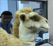 SML Camel