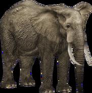 Zoo Tycoon African Bush Elephant