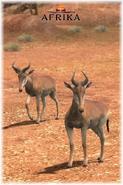 Afrika ps3 hartebeest by scottslive21-da3jrbo