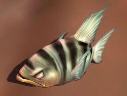 Archerfish IC.jpg