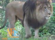 Binder Park Zoo Lion