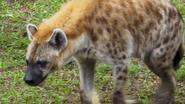 DAK Hyena