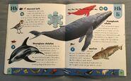 Polar Animals Dictionary (11)
