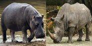 Rhinos vs Hippos