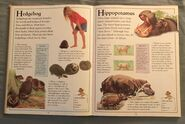The Kingfisher First Animal Encyclopedia (34)