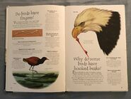 Birds (Over 100 Questions and Answers to Things You Want to Know) (1)
