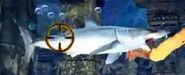 IMG 1629 shortfin