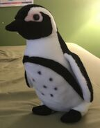 Jazzy the African Penguin