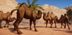 Camel, Domestic Bactrian (Planet Zoo)