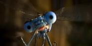 Doolitle Dragonfly