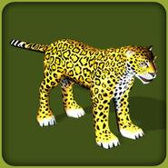 Jaguar Adult M